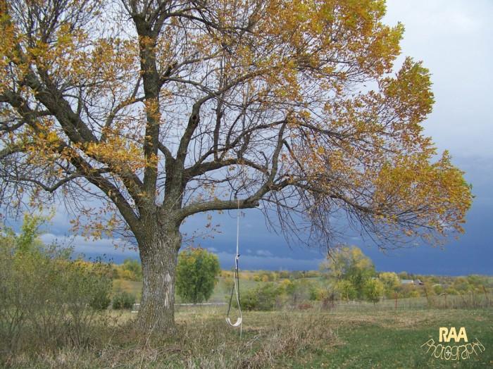 autumntreecopyrightrachela