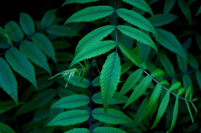 leafstems