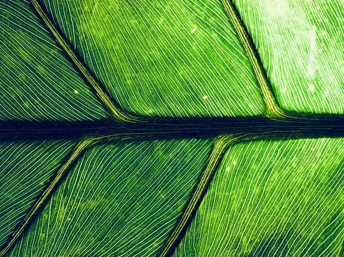Macro image of plant.